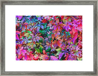 Autumn Virginia Creeper Framed Print by Diane Alexander
