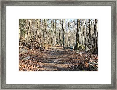 Autumn Walk Framed Print by Ann Pye