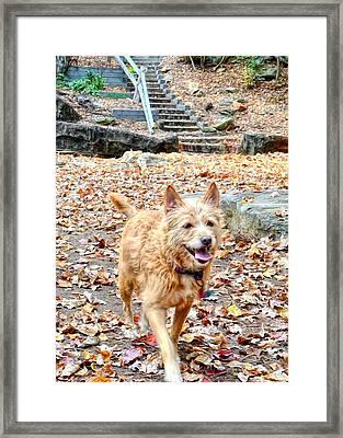 Autumn Walk Framed Print by Bob Jackson
