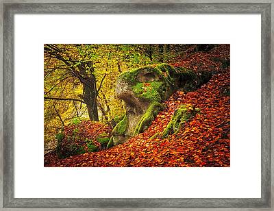 Autumn Walk In Forrest Framed Print