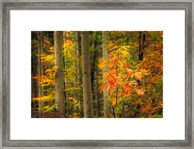 Autumn Walk In The Forest Framed Print
