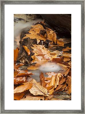 Autumn Water Eddy Framed Print by Darleen Stry