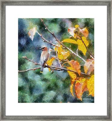 Autumn Waxwing Framed Print by Kerri Farley