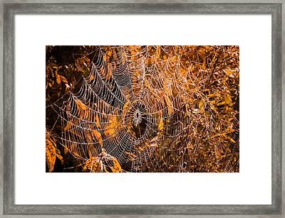 Autumn Web Framed Print by Brian Stevens
