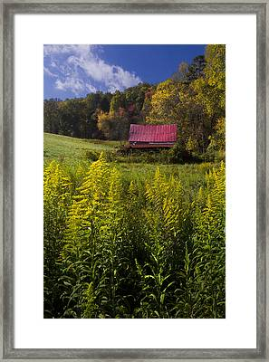 Autumn Wildflowers Framed Print by Debra and Dave Vanderlaan