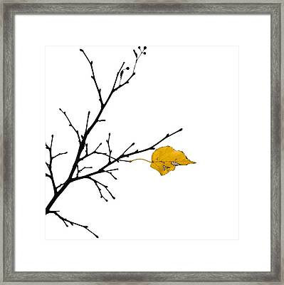 Autumn Winds - Featured 3 Framed Print by Alexander Senin