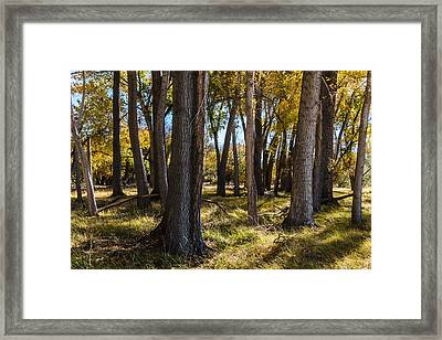 Autumn Wood Framed Print by Beverly Parks