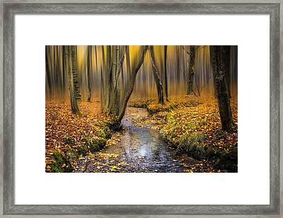Autumn Woodland Framed Print by Ian Hufton