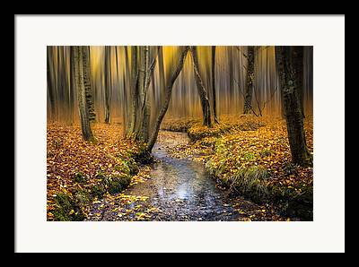 Woodland Scenes Photographs Framed Prints
