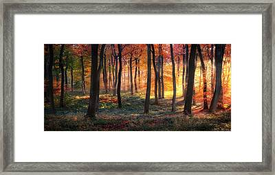 Autumn Woodland Sunrise Framed Print by Photokes