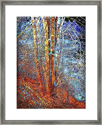 Autumn Woods Framed Print by Ann Powell