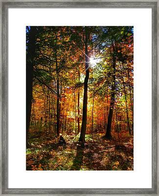 Autumn Woods Framed Print by Brook Burling