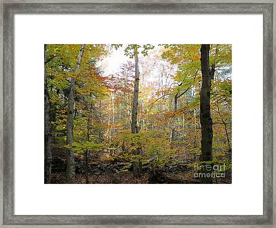 Autumn Woods Framed Print by Linda Marcille