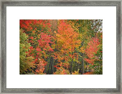 Autumn Woods Framed Print by Mary Carol Story