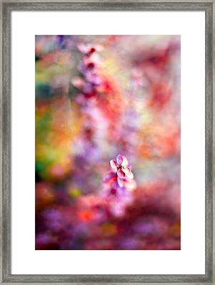 Autumnal Berberis 2 Framed Print