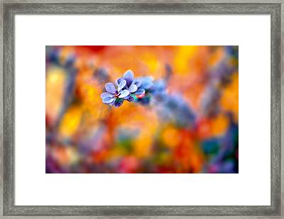 Autumnal Berberis Framed Print