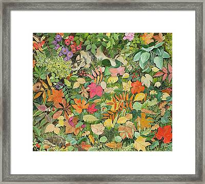 Autumnal Cat Framed Print