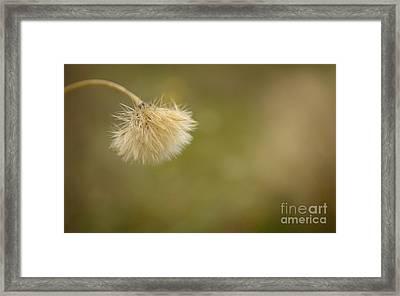 Autumnal Dandelion Fluff Framed Print by Jolanta Meskauskiene