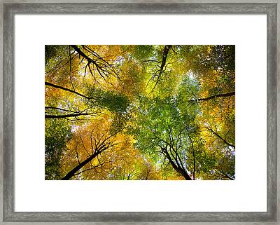 Autumnal Display Framed Print by Dave Bowman