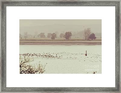 Autumnal Dreamland Iv Framed Print