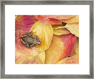 Autumnal Frog Framed Print by Tim Gainey