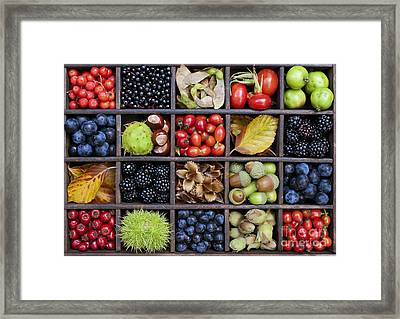 Autumnal Harvest Framed Print by Tim Gainey