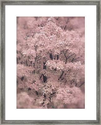 Autumnal Impression Framed Print by Tim Good