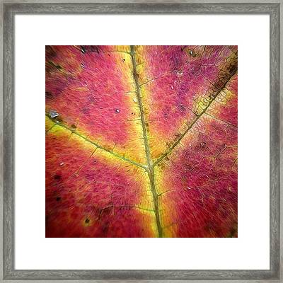 Autumnal Intricacy Framed Print by Natasha Marco