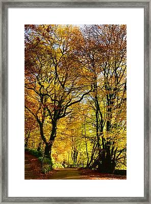 Autumnal Lane Dulverton Framed Print