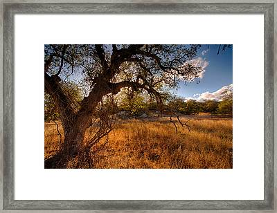 Autumnal Light Framed Print by Peter Tellone
