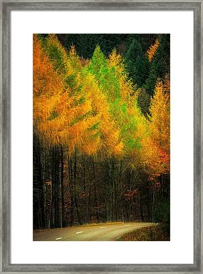 Autumnal Road Framed Print