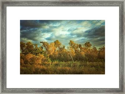 Autumnal San Diego Framed Print by Alexander Kunz