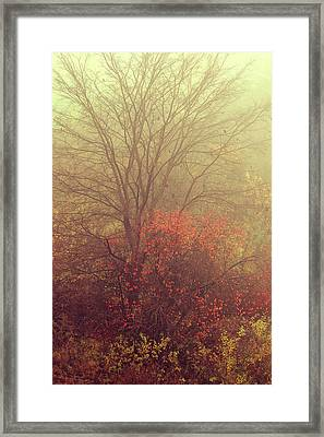 Autumnal Trees In Fog Framed Print by Jenny Rainbow