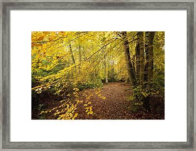 Autumnal Woodland II Framed Print