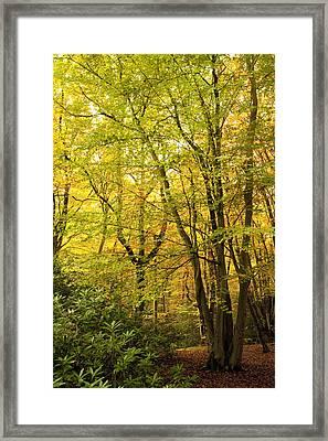 Autumnal Woodland IIi Framed Print by Natalie Kinnear