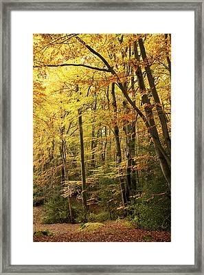 Autumnal Woodland Iv Framed Print