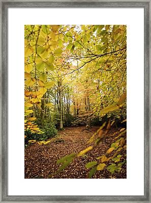 Autumnal Woodland V Framed Print