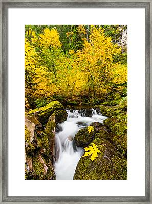 Autumn's Beginnings Framed Print by Patricia Davidson