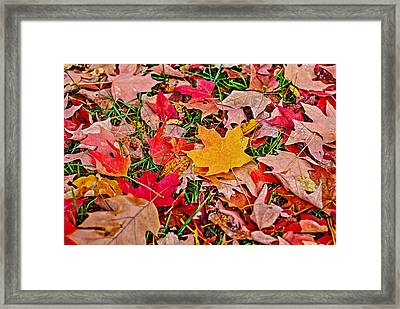 Autumn's Blanket Framed Print by SCB Captures