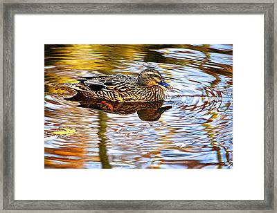 Autumns Brilliance Framed Print by Frozen in Time Fine Art Photography