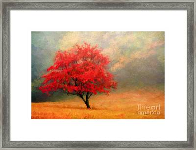 Autumns Colors Framed Print by Darren Fisher