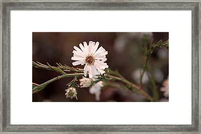 Autumn's Coming Framed Print by Milena Ilieva