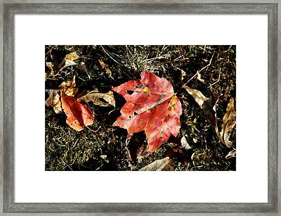 Autumns End Framed Print by JAMART Photography
