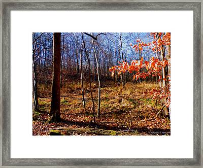 Autumn's End Framed Print