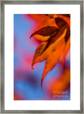 Autumn's Finest Framed Print by Anne Gilbert