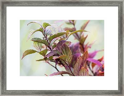 Autumns Finest Framed Print by Dana Moyer