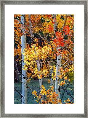 Autumn's Fire Framed Print by Jim Garrison