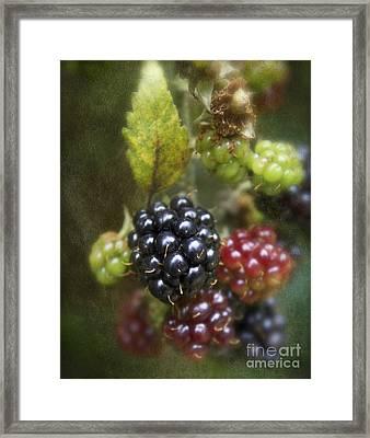 Autumn's Fruit Framed Print by Michelle Orai