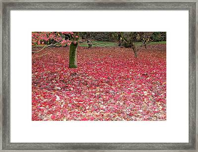 Autumn's Gift Framed Print
