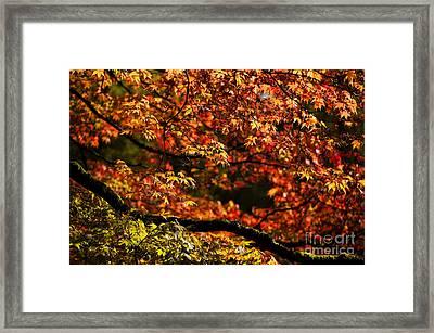 Autumn's Glory Framed Print by Anne Gilbert